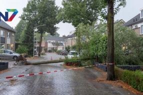 Nieuws: Beuningen kapt 107 dode en zieke bomen in hele gemeente