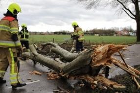 Nieuws: Storm trekt over Gelderland: bomen en paardentrailer waaien