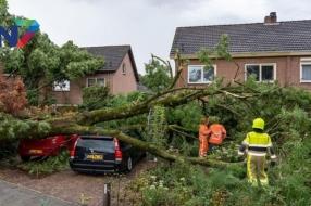 Nieuws: Stormschade: vier bomen omver in Ewijk