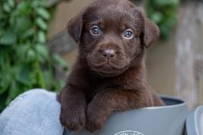 Nieuws: Tien puppy's uit hetzelfde nest begraven: 'Dit is vreselijk,